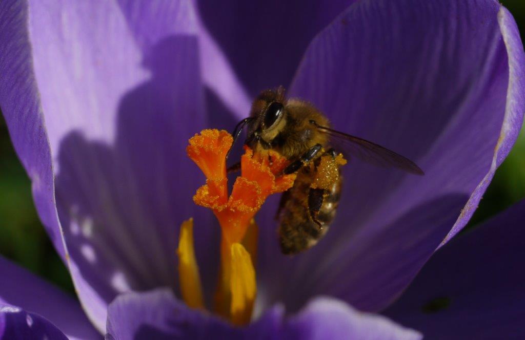 Ab sofort gibt es bei uns im Hofladen frisch geschleuderten, köstlichen Honig von Bienen aus dem Landschaftspark Heilmannshof